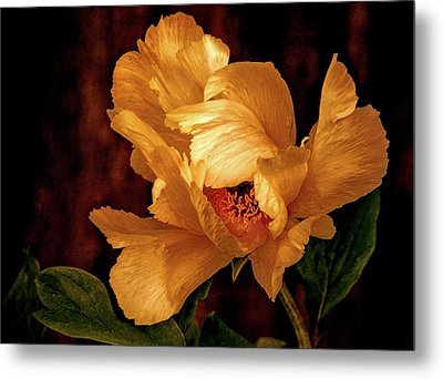 Metal Print featuring the photograph Golden Peony by Julie Palencia