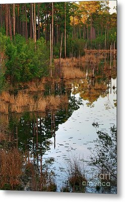 Metal Print featuring the photograph Golden Pond by Lori Mellen-Pagliaro