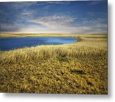 Golden Prairie Metal Print
