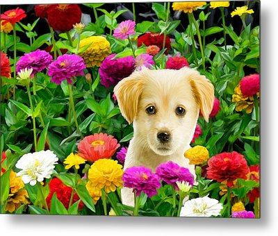 Golden Puppy In The Zinnias Metal Print