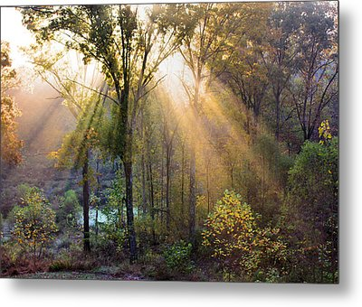 Golden Rays Metal Print by Kristin Elmquist