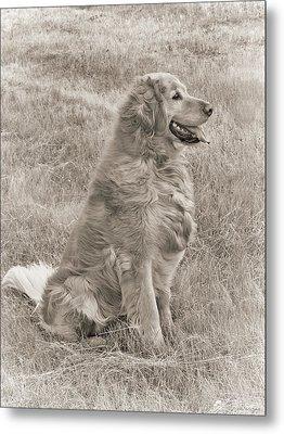 Golden Retriever Dog Sepia Metal Print by Jennie Marie Schell
