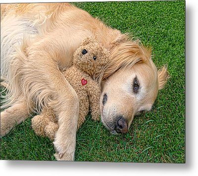 Golden Retriever Dog Teddy Bear Love Metal Print by Jennie Marie Schell