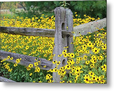 Golden-rod  Crowd Out Metal Print by Deborah  Crew-Johnson