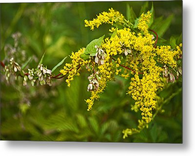 Golden Rod Metal Print by Elsa Marie Santoro