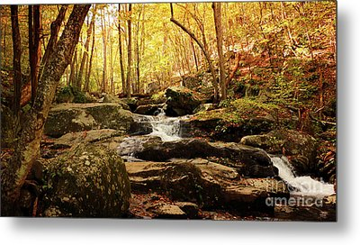 Golden Serenity Metal Print by Rebecca Davis