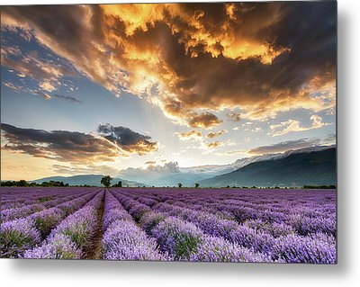 Golden Sky, Violet Earth Metal Print by Evgeni Dinev
