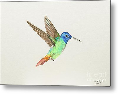 Golden-tailed Sapphire Metal Print