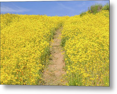 Metal Print featuring the photograph Golden Trail by Marc Crumpler