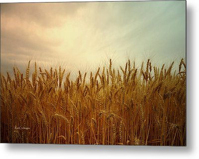 Golden Wheat Metal Print by Kae Cheatham
