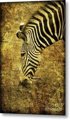 Golden Zebra  Metal Print by Saija  Lehtonen