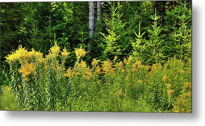 Metal Print featuring the photograph Goldenrod In The Adirondacks by David Patterson