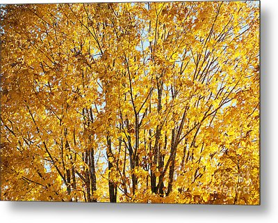 Goldenyellows Metal Print by Aimelle