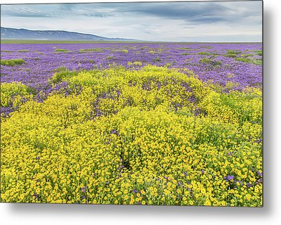 Metal Print featuring the photograph Goldfield And Phacelia by Marc Crumpler