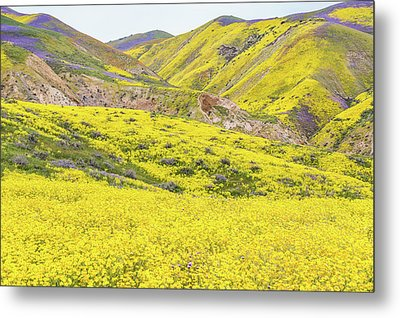 Metal Print featuring the photograph Goldfields And Temblor Hills by Marc Crumpler