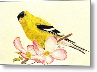 Goldfinch Spring Metal Print by Angela Davies