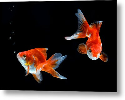 Goldfish Metal Print by Dung Ma