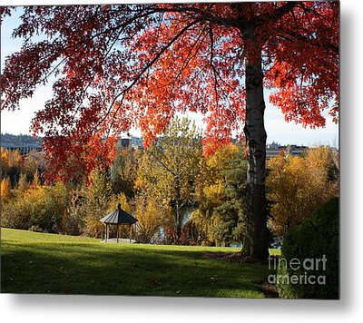 Gonzaga With Autumn Tree Canopy Metal Print by Carol Groenen