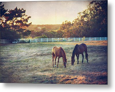 Good Company Metal Print by Laurie Search