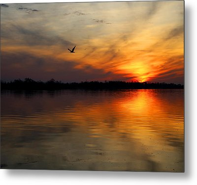 Good Morning Metal Print by Judy Vincent