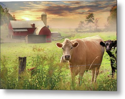 Metal Print featuring the photograph Good Morning by Lori Deiter