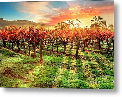 Good Morning Napa Metal Print by Jon Neidert