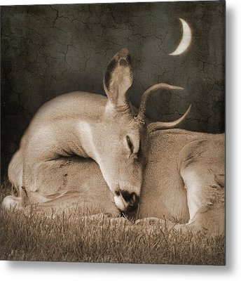 Metal Print featuring the photograph Goodnight Deer by Sally Banfill