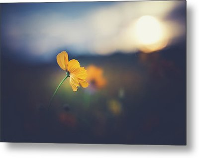 Metal Print featuring the photograph Goodnight Sun by Shane Holsclaw