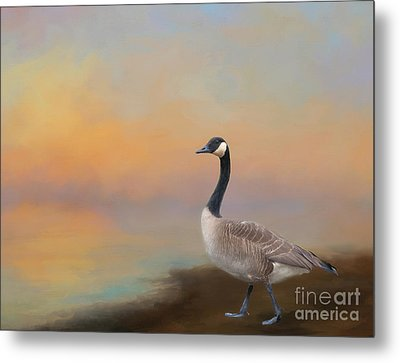 Goose At Sunset Metal Print by Kathleen Rinker