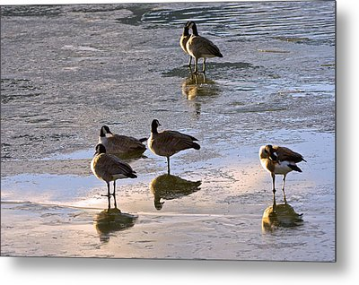 Goose Ice Refections Metal Print by James Steele