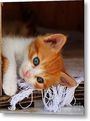 Gorgeous Blue Eyes Metal Print