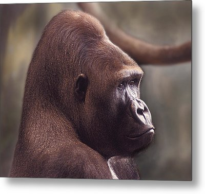 Gorilla Portrait Metal Print by Greg Slocum
