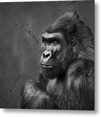 Gorilla Stare - Black And White Metal Print by Nikolyn McDonald