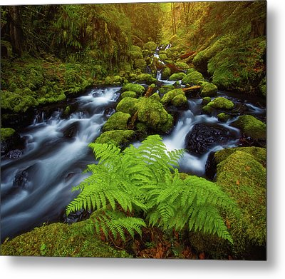 Gorton Creek Fern Metal Print by Darren White