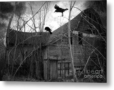 Gothic Surreal Haunting Old Barn With Crows Ravens - Spooky Gothic Black White Ravens Flying Metal Print by Kathy Fornal