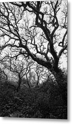 Gothic Woods II Metal Print by Marco Oliveira