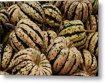 Gourds In White And Green Metal Print by Jame Hayes
