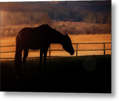 Metal Print featuring the photograph Grace, Beauty, Light by Debby Herold