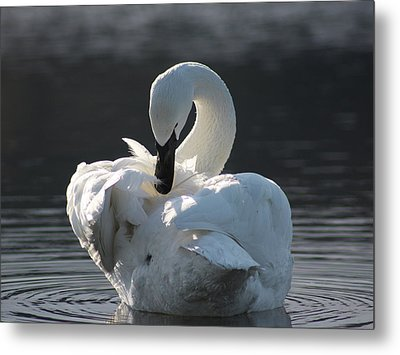 Metal Print featuring the photograph Grace by Cathie Douglas