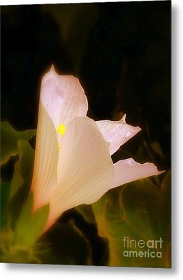 Grace Metal Print by Priscilla Richardson