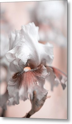 Metal Print featuring the photograph Graceful Dream by Jenny Rainbow