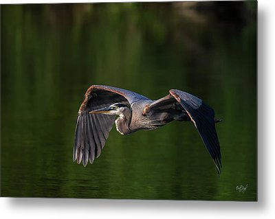 Metal Print featuring the photograph Graceful Flight by Everet Regal