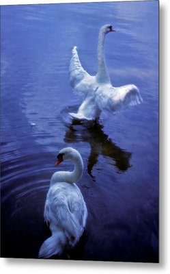 Metal Print featuring the photograph Graceful Swans by Marie Hicks