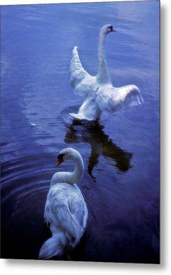 Graceful Swans Metal Print