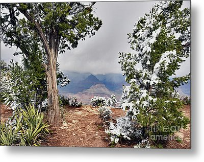 Grand Canyon Through The Trees Metal Print by Debby Pueschel