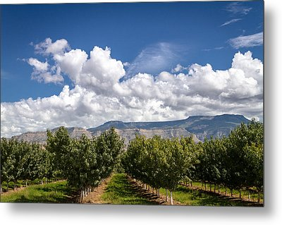 Grand Valley Orchards Metal Print