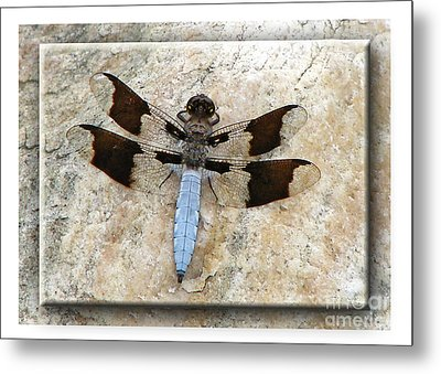Granite Dragon Metal Print by Deborah Johnson