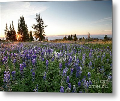 Granite Mountains Sunrise Metal Print by Idaho Scenic Images Linda Lantzy