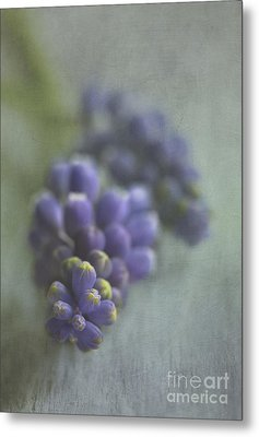 Grape Hyacinth Metal Print