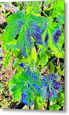 Grape Leaves Metal Print by Will Borden